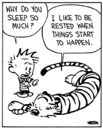 calvin and hobbes sleep